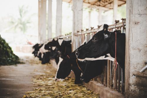 動物的日增重如何計算? | 飼料添加劑