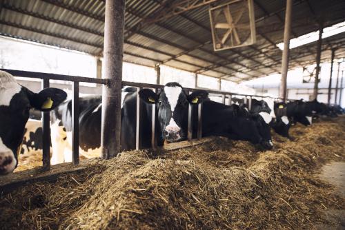 什麼是料肉比? | 飼料添加劑